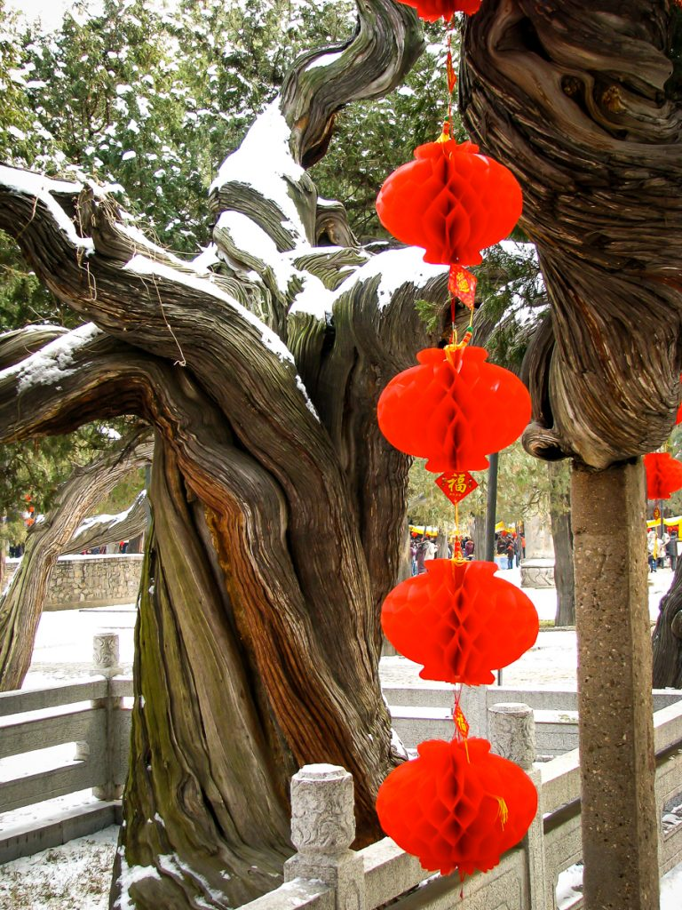Ancient tree in Dai Temple, Tai An, Shandong