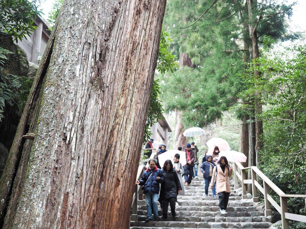 Huge trees, Ise Grand Shrine