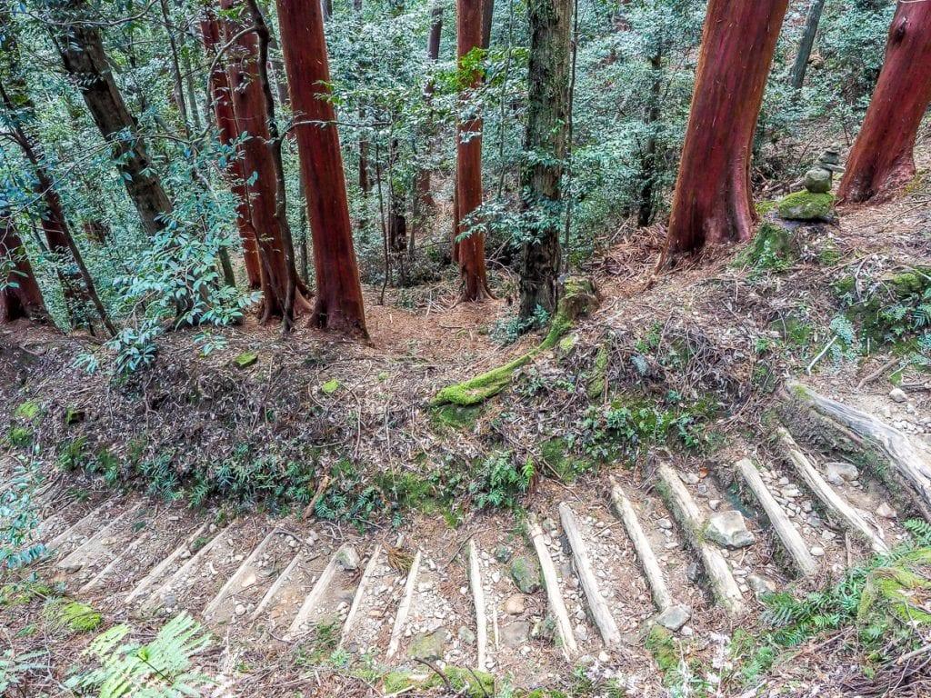 Red hinoki trees on the Kumano Kodo trek, Japan