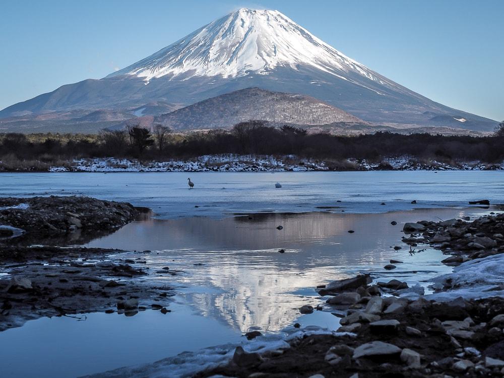 Mt. Fuji reflected on Lake Shoji in winter