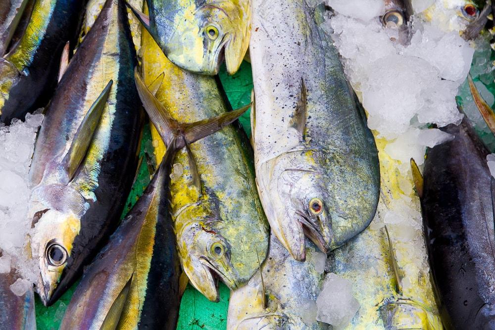 Xingang Fish Market, Chenggong , Taitung