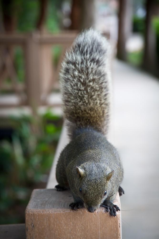Squirrel, Rongxing Park, Taipei