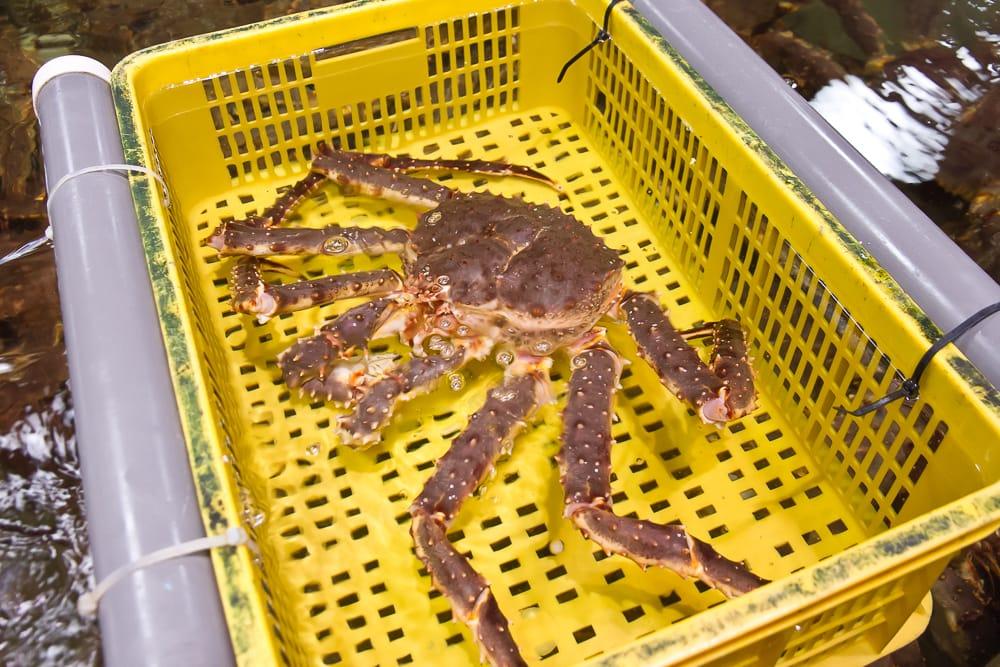 Spider crab, Addiction Aquatic, Taipei