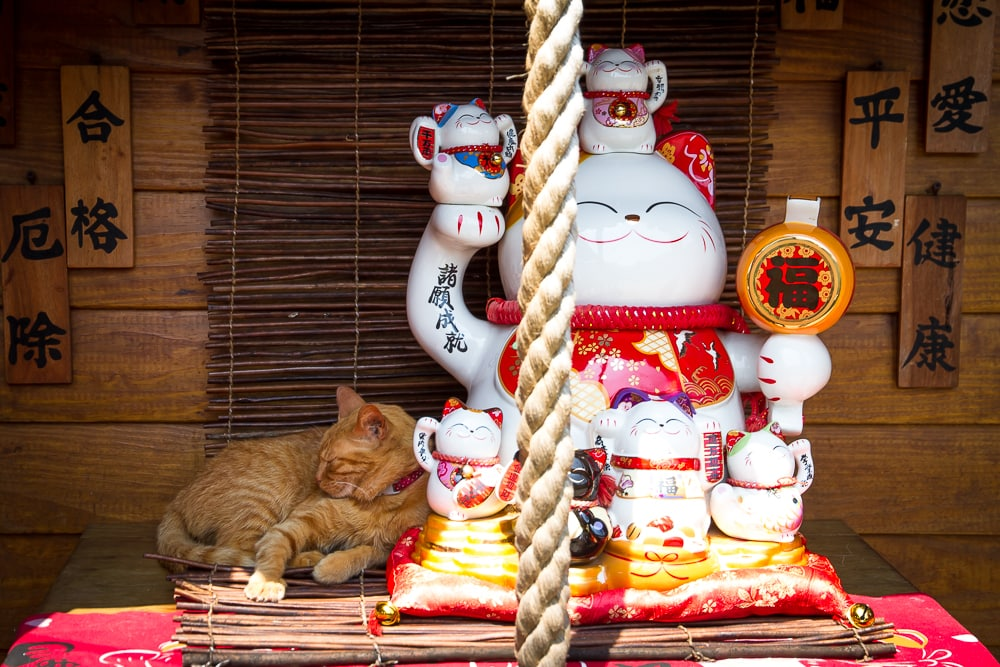 Cat snoozing in a kitty shrine at the Houtong Cat Village, Taiwan