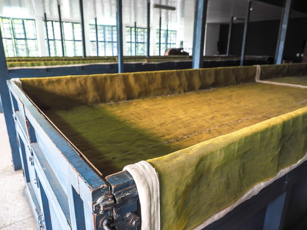 Tea drying equipment at Antique Assam Tea Farm