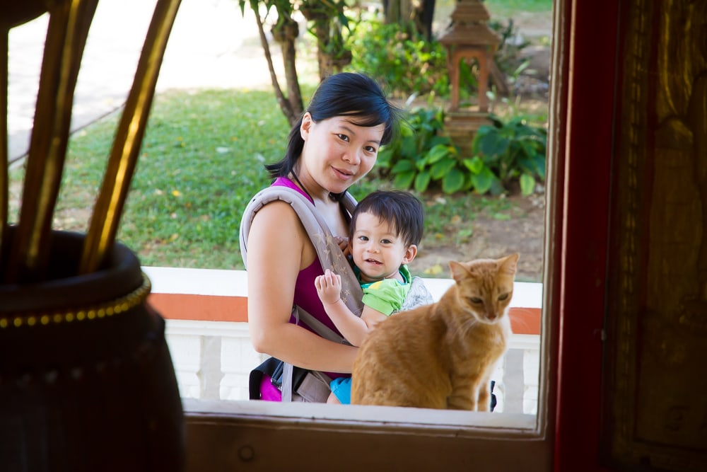 Cat at Wat Chalong, Phuket