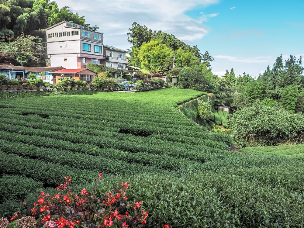 Shizhuo tea farm guesthouse