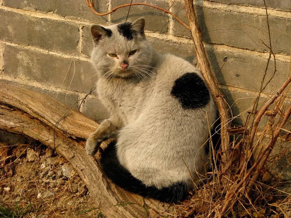A dirty Confucian cat in the Temple of Confucius, Qufu