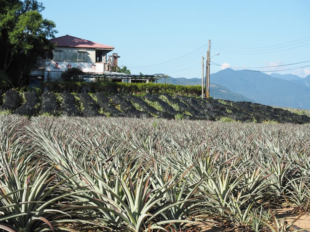 Kai Tai B&B, a great place to stay in Luye, Taiwan on the Luye Plateau