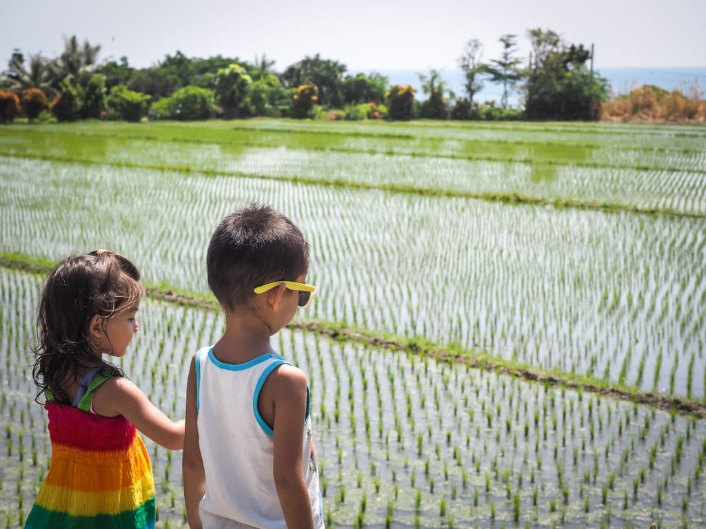 Rice paddies in Taitung with kids