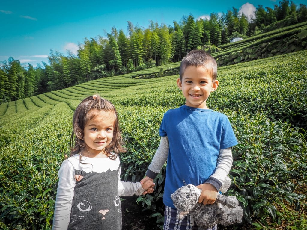 Visiting an Alishan tea farm with kids