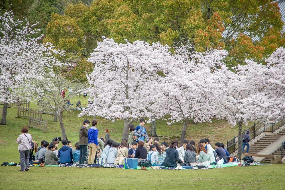 Expo 70 Commemorative Park, one of the best Osaka cherry blossom spots
