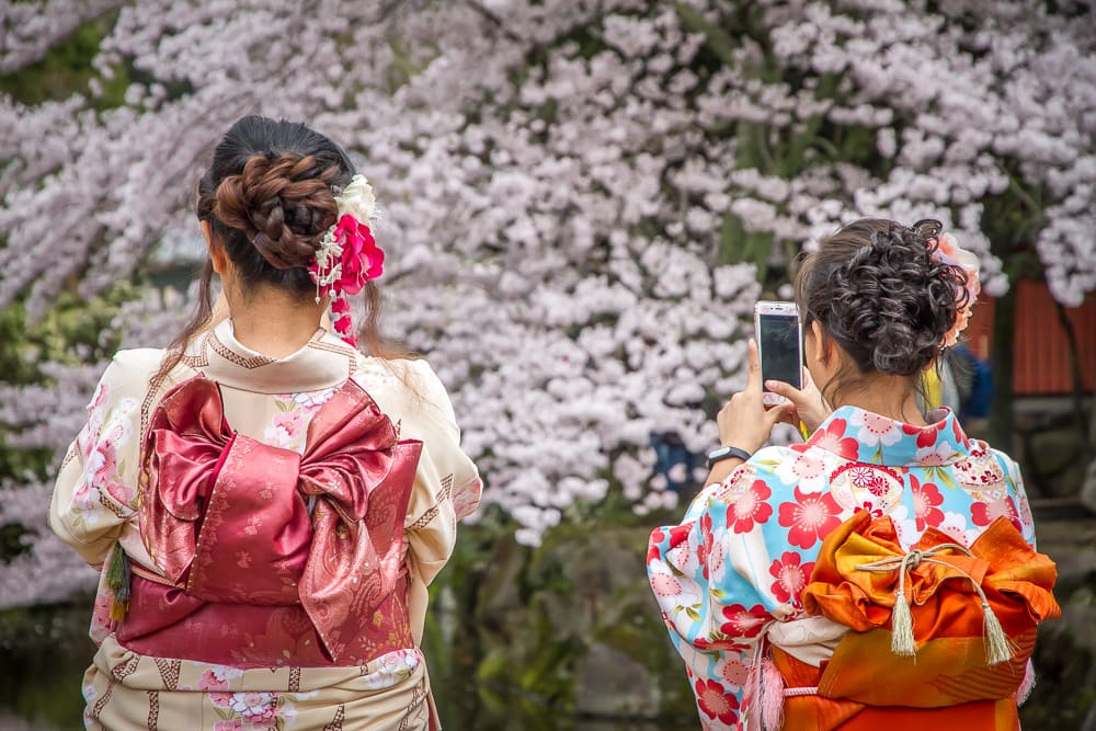 Geishas photographing cherry blossoms