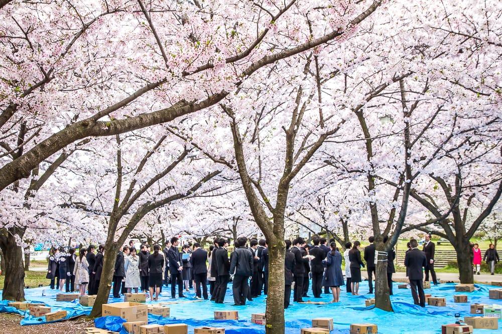 Hanami in Osaka Castle Park