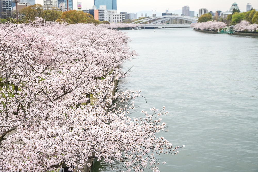 Kema Sakuranomiya cherry blossoms in Osaka