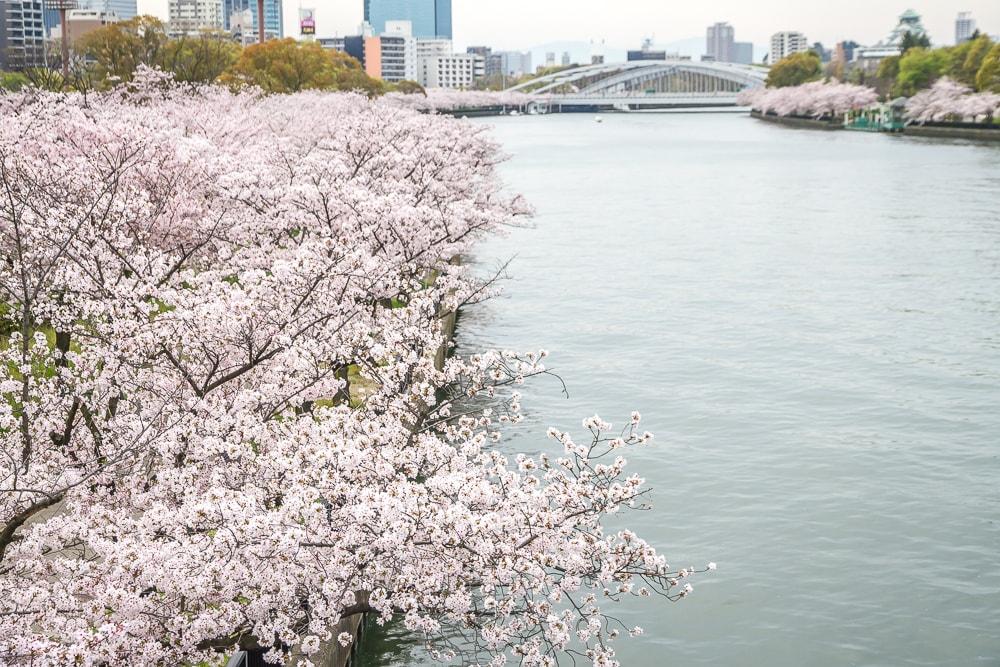 Kema Sakuranomiya cherry blossoms in Osaka