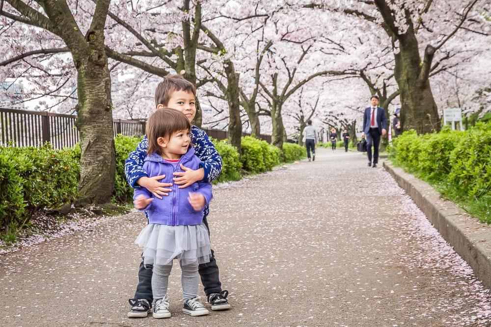 Canopy of cherry blossoms at Kema Sakuranomiya Park in Osaka