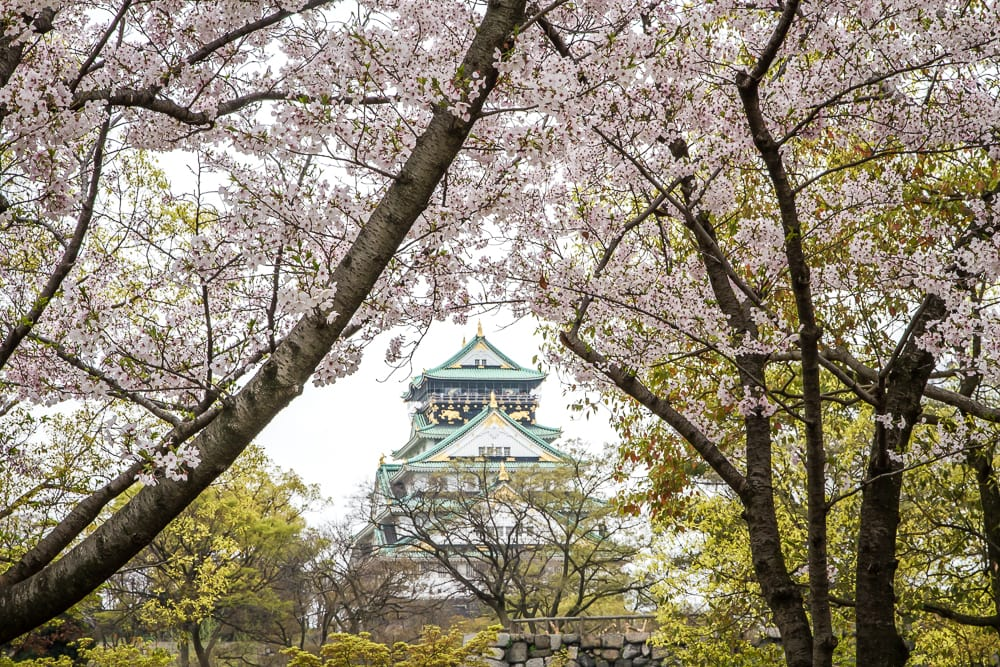 Osaka Castle with cherry blossoms