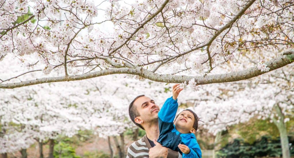 The best places to see cherry blossoms in Osaka