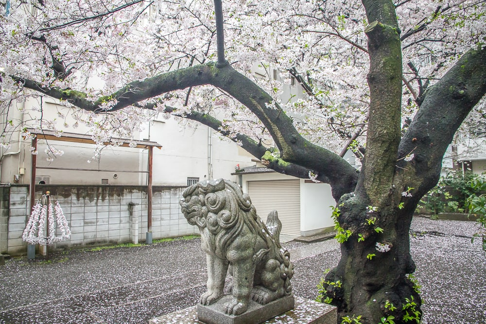 Mitsu Hachimangu Shrine, Osaka with cherry blossoms