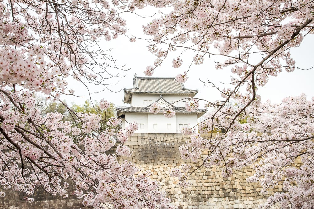 Sakura at Osaka Castle Park