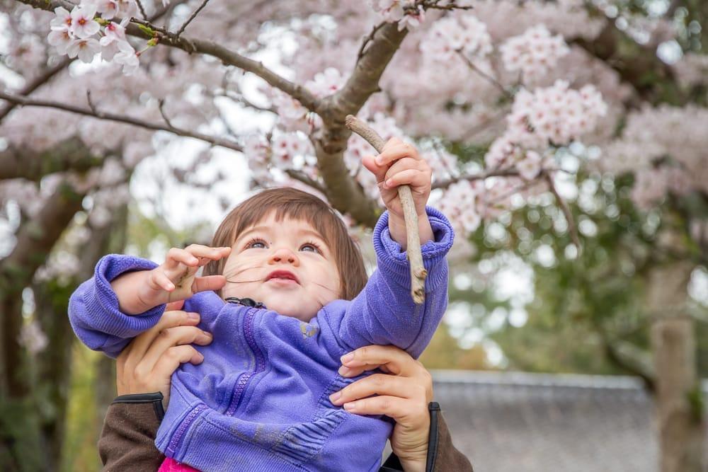 Tsurumi Ryokuchi Park cherry blossoms