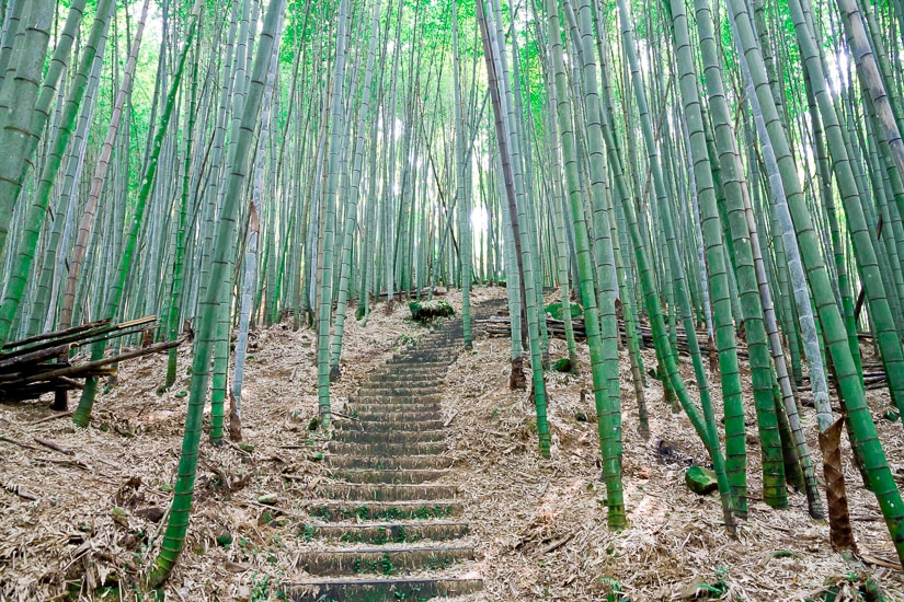 Bamboo forest at Baxianshan National Forest Recreation Area, Taichung