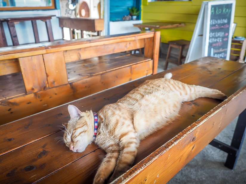 Cat at Epicurean Pub, Orchid Island