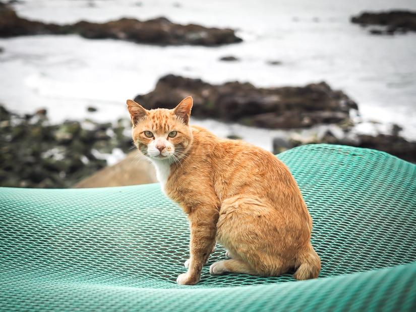 Cat standing by the sea near Hadong Yonggungsa