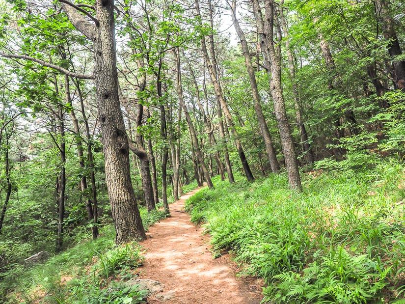 Hiking to Seokbulsa through the forest of Geumjeongsan
