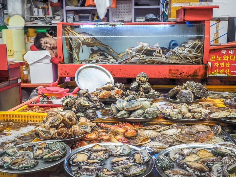 A fish stall vendor asleep by various seafoods at Jagalchi Market, Busan