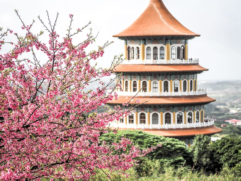 Tianyuan temple, where you can sometimes see cherry blossoms during Chinese New Year