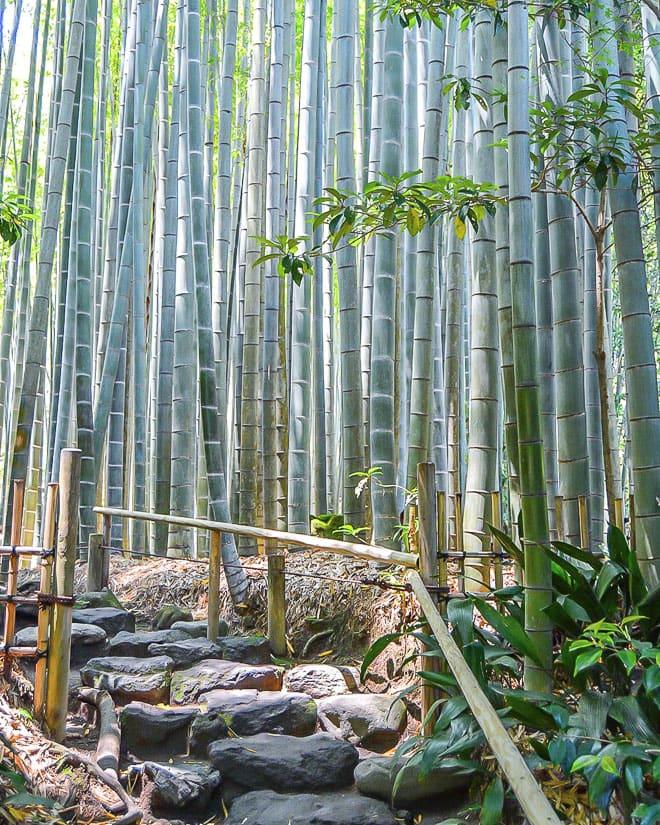 Hokokuji temple bamboo grove, Kamakura