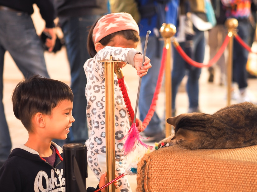 My children playing with a cat inside the Hagia Sophia