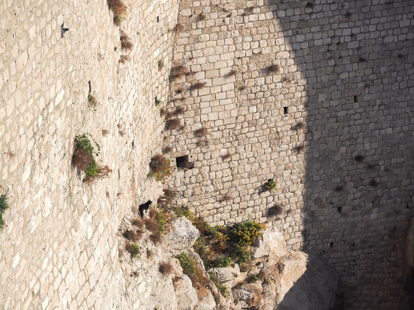 A black cat on a section of the Old City wall of Dubrovnik
