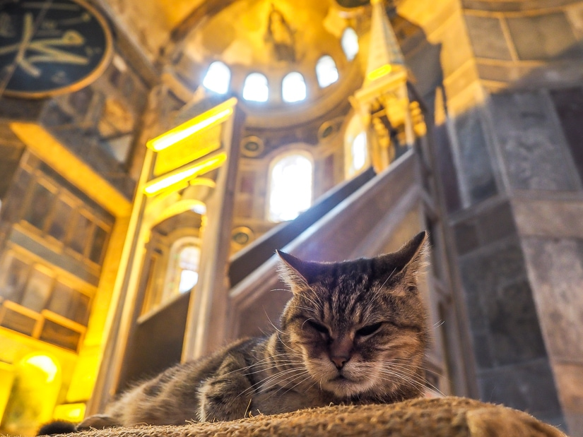 A cat sleeping inside the Hagia Sophia, one of the top things to do in Istanbul with kids
