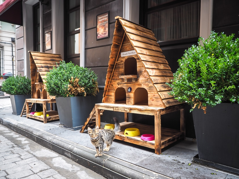 A cat house on the street in Istanbul