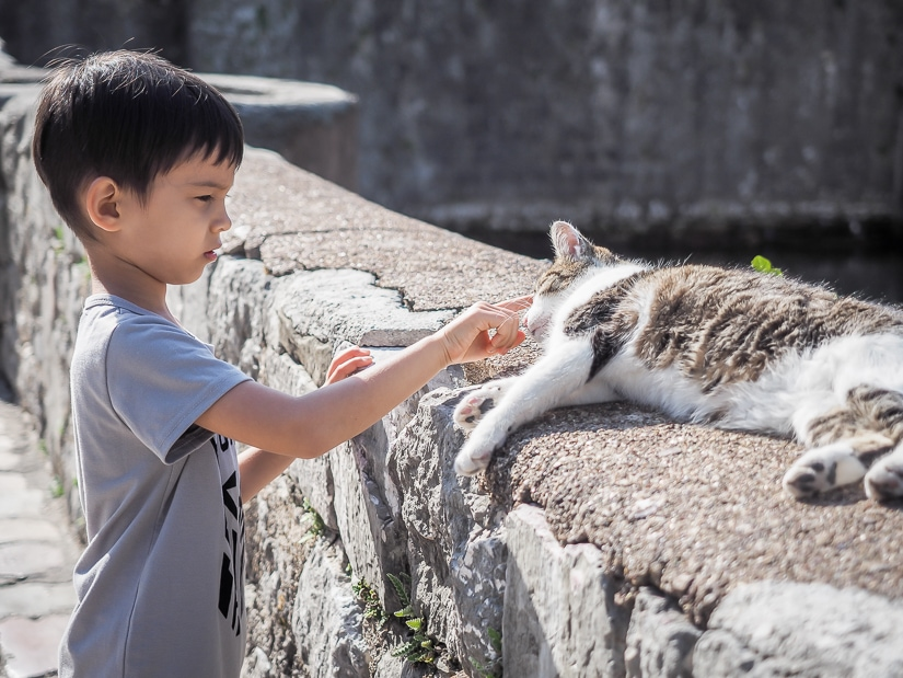 Sage petting a cat on a wall in the Old City of Kotor