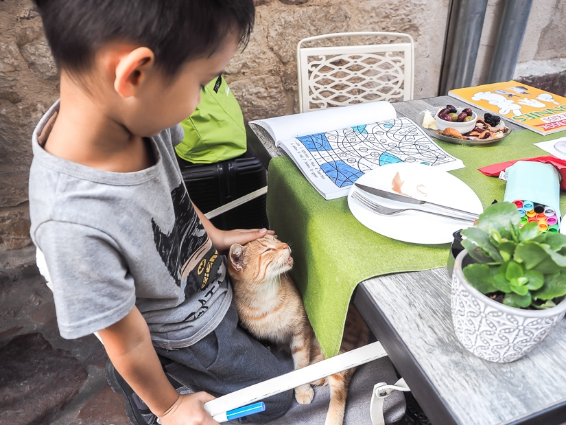 My son petting a cat in his lap in a restaurant in Kotor