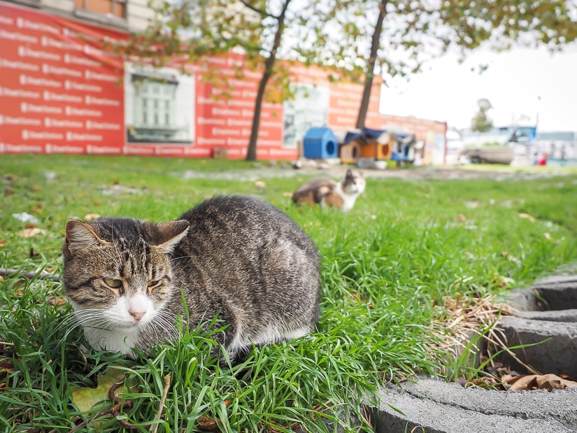 Cats in a park in Istanbul with cat houses in the background