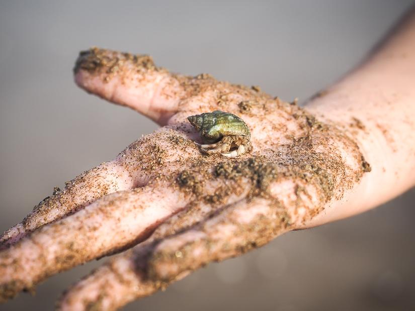 Hermit crab in my daughter's hand at beach in front of Grand Hyatt