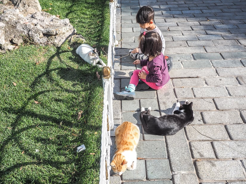 Our kids with several cats in an Istanbul park