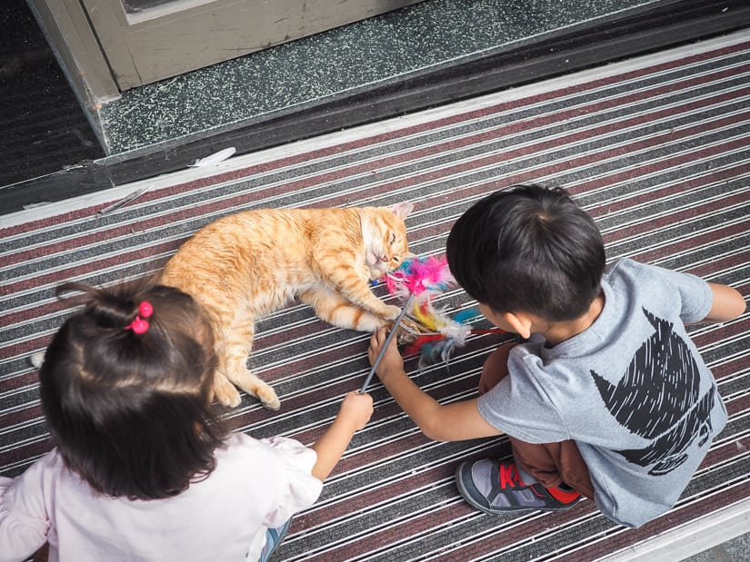 Our kids playing with a cat on the street of Istanbul