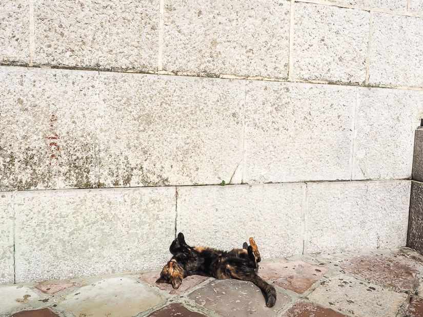 A cat lying upside down beside a white wall in the Old Town of Kotor