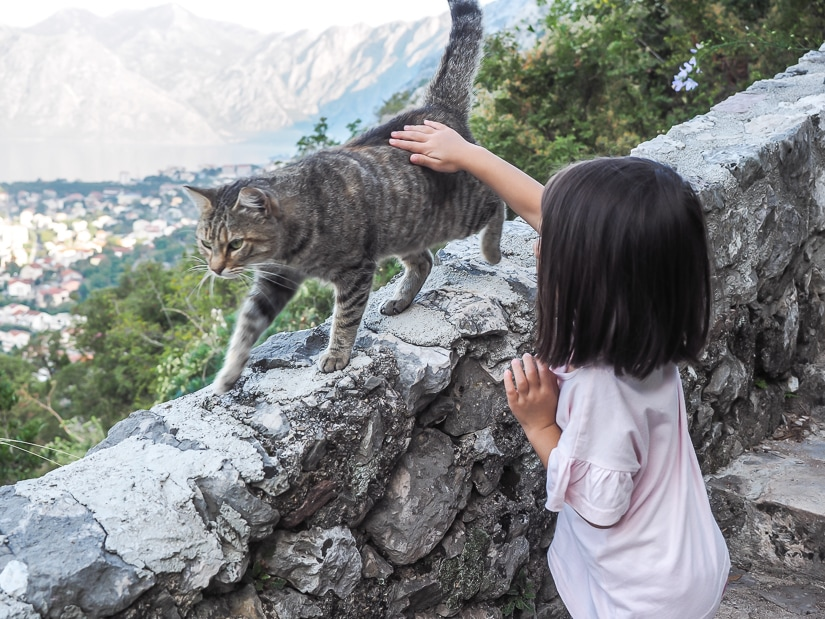 My daughter petting a cat on the walk to Kotor Fortress