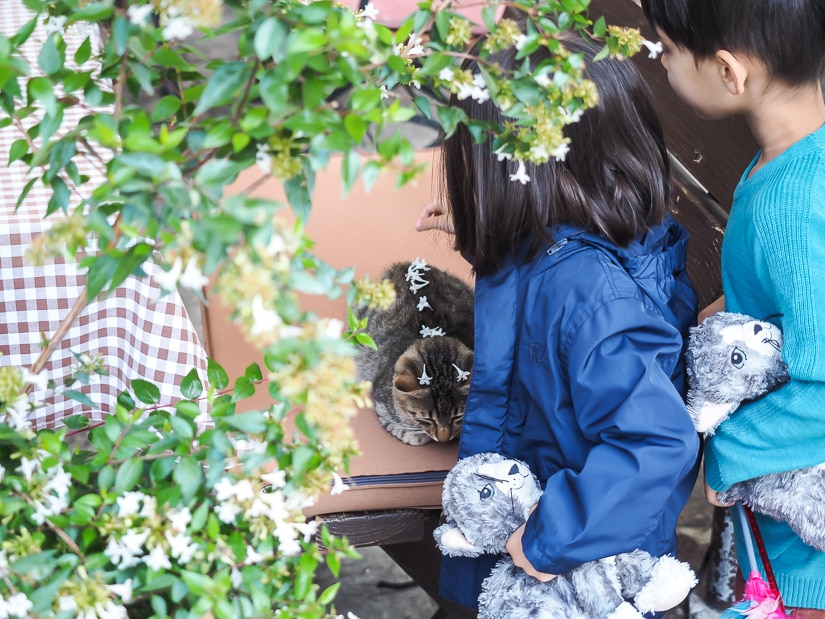 Our kids putting flowers on a cat in a restaurant in Kotor