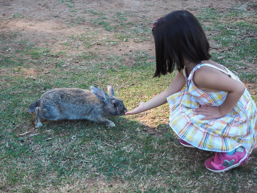 My daughter almost touching a rabbit's nose on Lokrum island