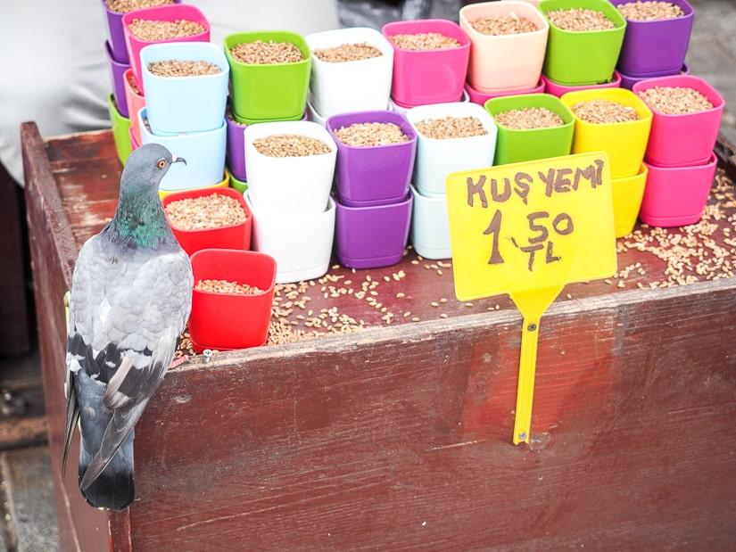 Pigeon food, Istanbul Spice Bazaar