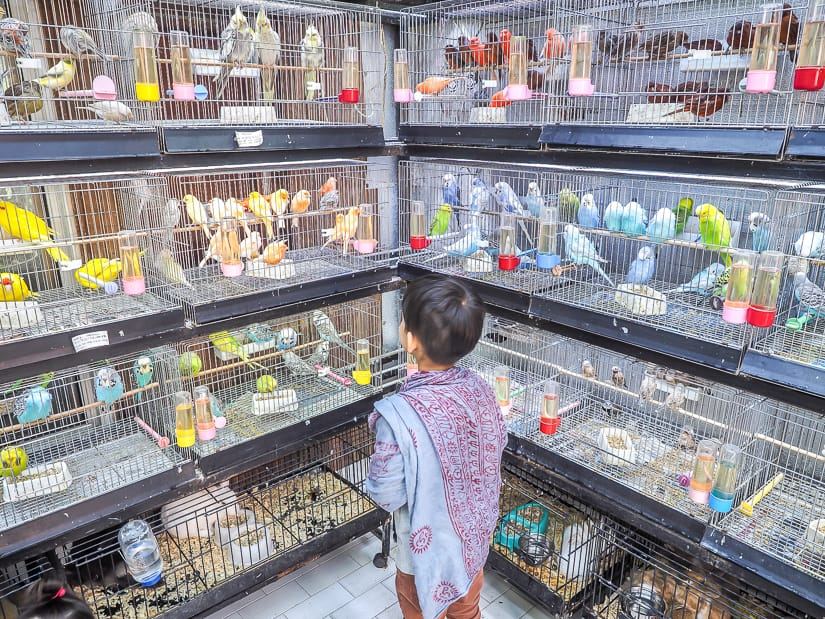 Sage in front of many bird cages in the animal section of the Spice Bazaar