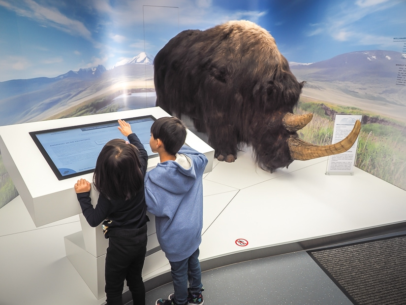 Our kids with an exotic ice age animal display at the Salzburg Nature Museum